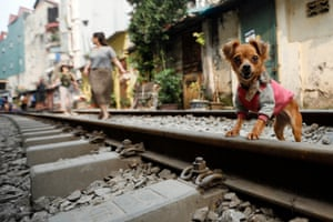 A dog stands on a railway track that passes through an old residential area of Hanoi