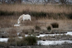 A horse drinks from a wetland at the Albufera Natural Reserve near Alcudia on the island of Mallorca.