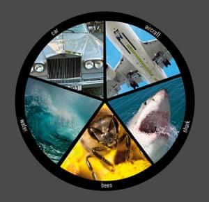 shark v water assessing risk