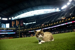 Grumpy Cat on the grass at Chase Field in Phoenix, Arizona in September 2015