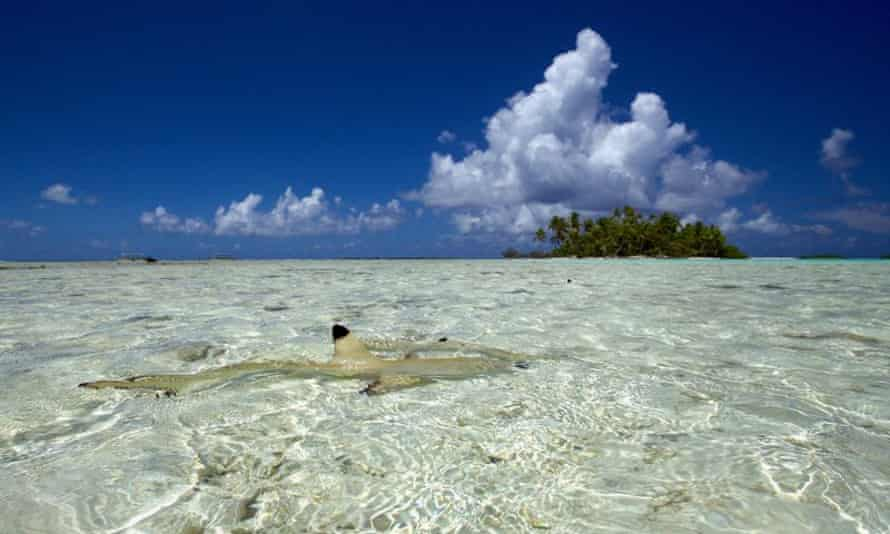 A black tip reef shark in the Blue Lagoon featured in Discovery Channel's Shark Week