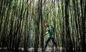 A competitor walks through a bamboo forest in Gaoligong.