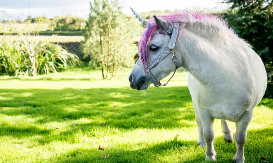 A pony dressed as a unicorn