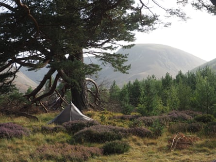 Camped amid the resurgent pine forest of Glen Feshie.