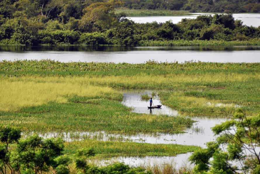 Marshy landscape in the Pantanal wetland, Corumba.