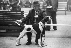 A judge assesses a dog