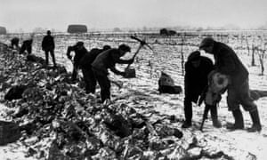 Will we ever see another winter as bitter as this? Farm workers use a pneumatic drill to get parsnips out of frozen earth in February 1947.