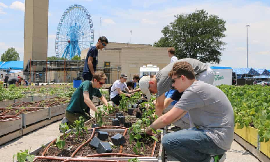 People planting vegetables in planter boxes with the ferris wheel of the state fair of texas in the background