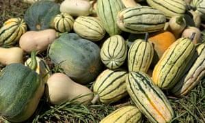 Several squash cultivar, including delicata squash, from Palisa Anderson's farm
