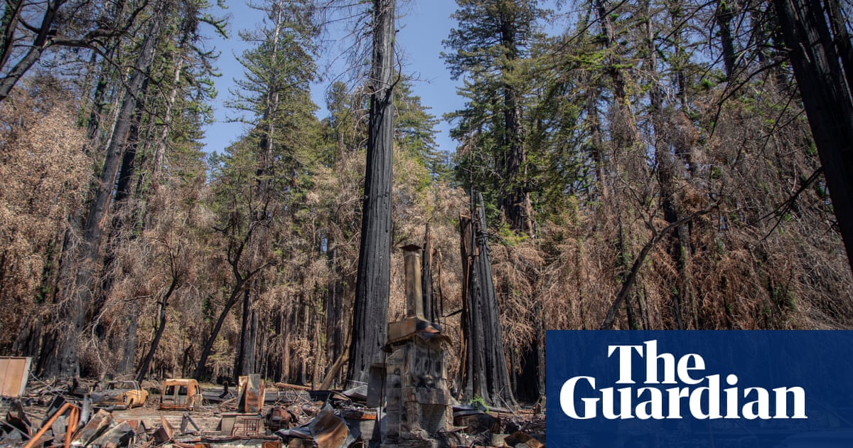 'It will be beautiful again': how California's redwood forest is recovering after last year's wildfires