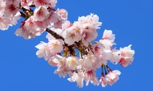 a picture of blossom