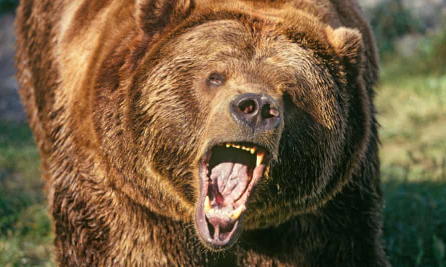 Most people polled were realistic, but 7% of men said they could take down a grizzly bear.