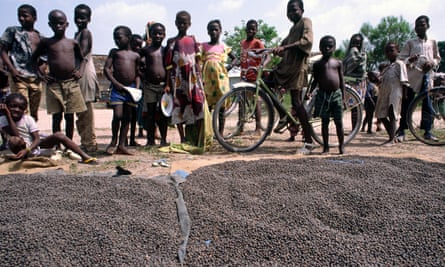 Biji kakao dijemur di bawah sinar matahari, Pantai Gading
