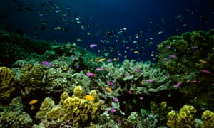 Labor is urging the Greens to help them disallow the Coalition's marine park management plan.