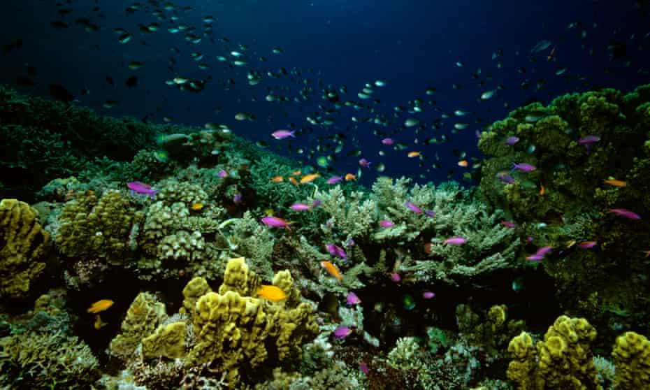 Australia's Great Barrier Reef, Queensland.