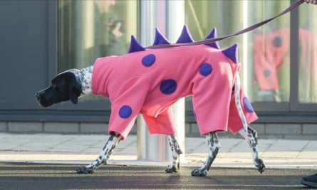 A braque d'Auvergne dog dressed as a pink dinosaur (perhaps) at Crufts dog show in Birmingham, March 2020.