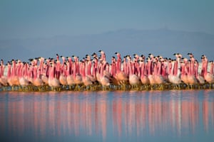 A chain of salt lakes, found at more than 4000m in the Andes, provides a safe refuge for flamingo colonies