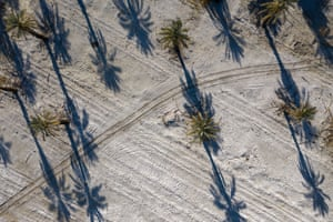 Date palms near Mecca, California. The state's water-intensive agriculture industry depends on annual rainfall.
