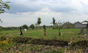 Children flying kites in the rice fields of Beleke.