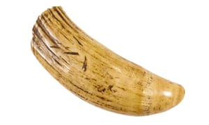 A 'tabua' or sperm whale tooth, which Marina Warner found among her late mother's possessions.