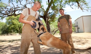 Training for a military working dog