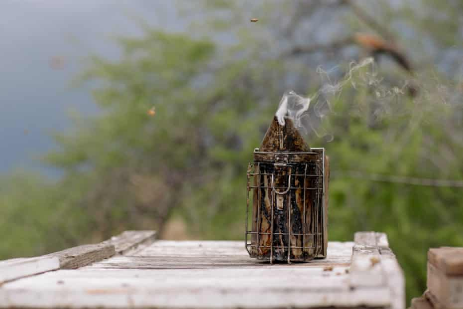 A smoker deters bees while Adam and Dennis Arp work on the hives outside Rye, Arizona on May 8, 2019.