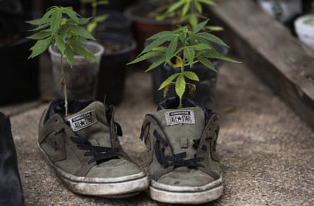 plants grown in sports shoes