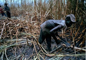 Sugar workers cut cane in the Barahono area of the Dominican Republic