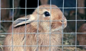 'Even it you've got a six-foot rabbit hutch, it's not big enough.'