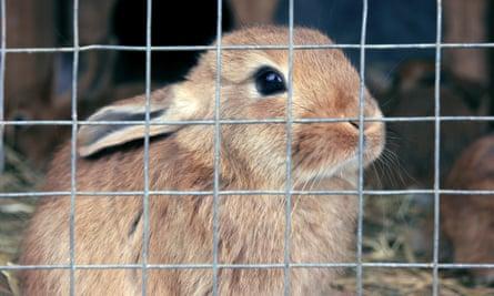 Not Cross Bunnies Can A Pet Rabbit Ever Be Happy Animal Welfare The Guardian