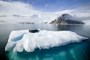 A Weddell seal lying on an ice floe