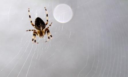 A spider is highlighted by the sun