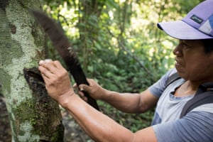 Conservationist and forest guide Jaime Pena opens up a seed that can be used to make candle wax, in the Amazon rainforest, Peru. Jaime has been working in this area of the rainforest for decades, and is expert in its flora and fauna.