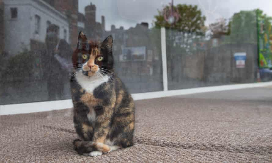 A cat sits inside the window of a carpet shop in south London during lockdown.