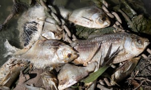 Darling River mass fish kill