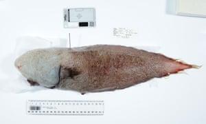 The faceless fish