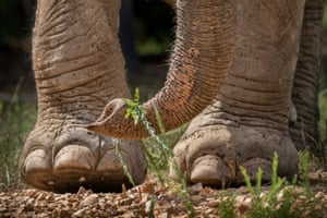 A close up of an elephant's feet, at the Elephant Sanctuary, Hohenwald, Tennessee.