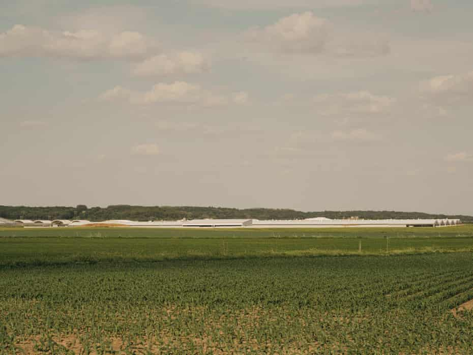 Pinnacle dairy is seen from a distance – long, low white buildings surrounded by a green field.
