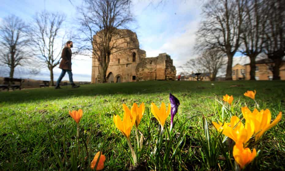 crocuses in bloom at Knaresborough Castle in Yorkshire.