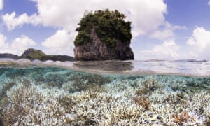 Coral after bleaching in American Samoa, when the XL Catlin Seaview Survey responded to a NOAA coral bleaching alert