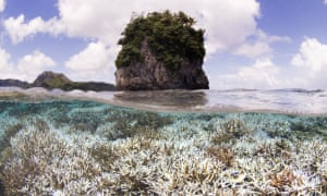 Coral after bleaching in American Samoa.
