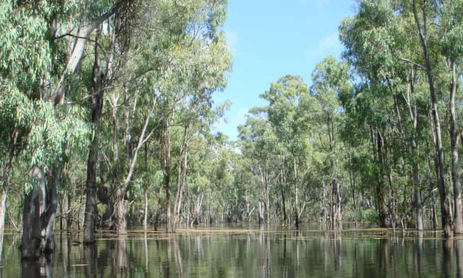 Murray Valley national park in NSW