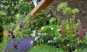 Chris Beardshaw's garden