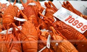 Lobster at the Sydney Fish Market in Pyrmont, Sydney.