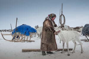 A herder strokes a reindeer at a nomad camp