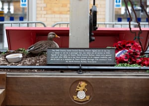 A Greylag Goose which has nested in a flower bed and laid four eggs inside the now quiet York railway station. The bird, nicknamed Mother Goose, was first spotted last month by British Transport Police. The train station has fallen quiet due to government restrictions on travel.