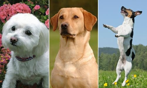 Most popular and unusual Australian dog names and breeds