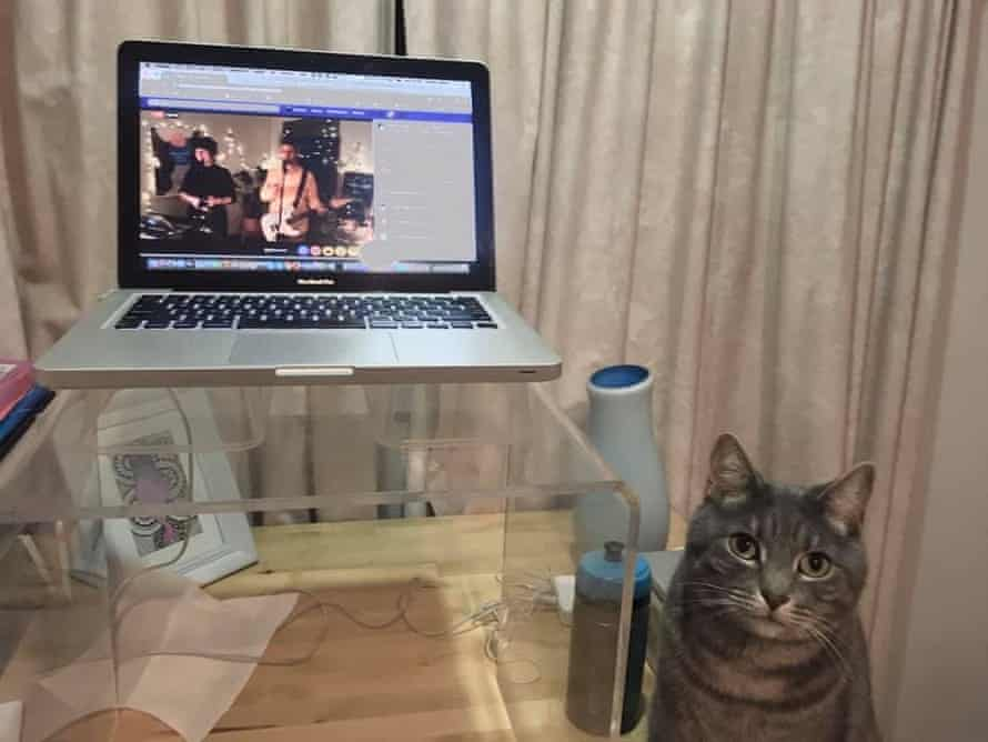 A cat watches a virtual choir practice over Facebook Live.