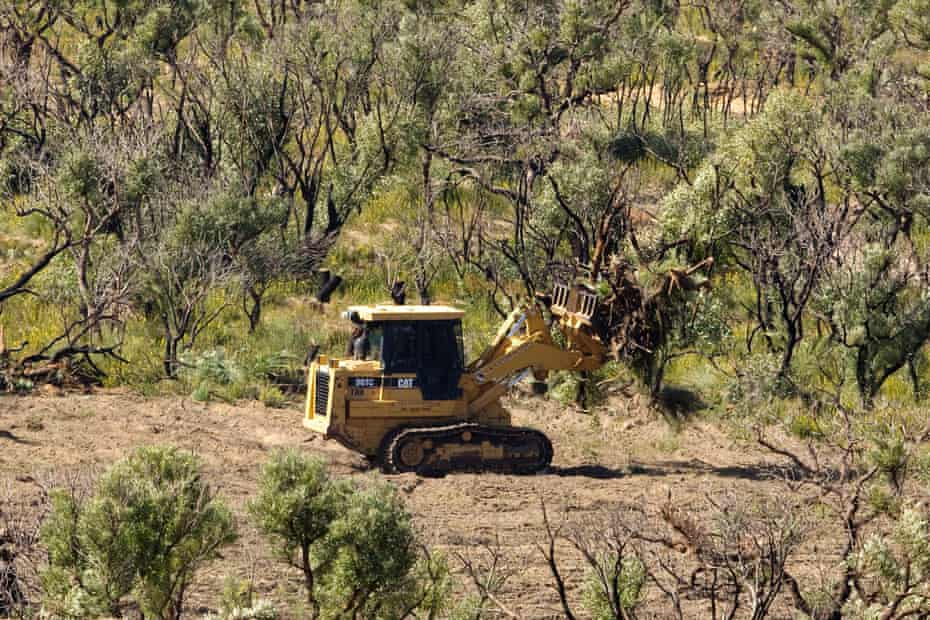 The armoury of bulldozers through Australia's savannas is supported by a common network of power brokers, lawmakers and enforcement agencies.