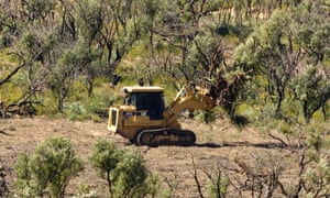 The NSW government gave permission to clear over 7,000 hectares of native vegetation in 2015-16, the last year figures are available.